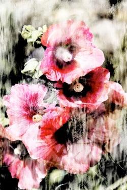 FleursAquarelle